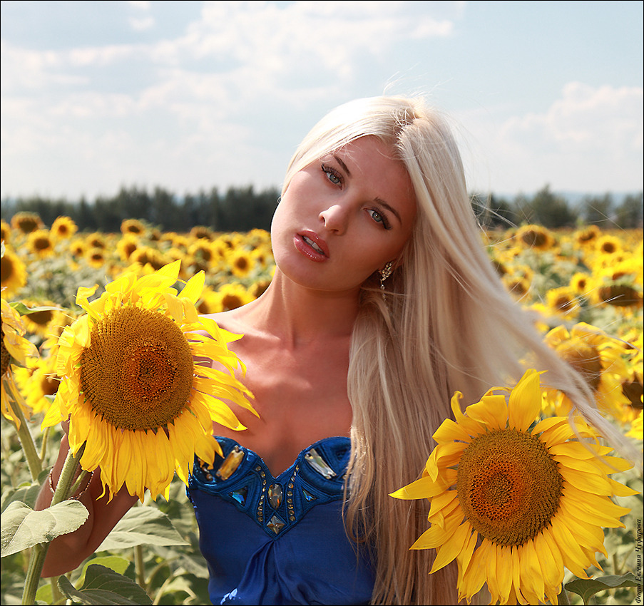 Girl in the sunflower field | sunflower, girl, summer, blond